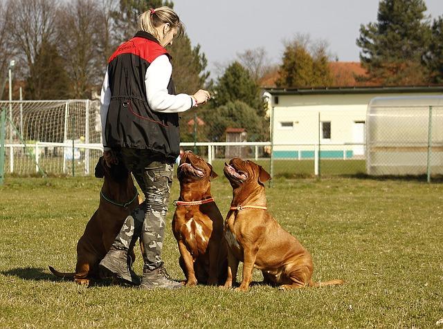 výcvik psů.jpg